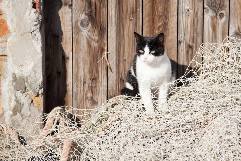 在一个捕鱼网的街道猫 图库摄影