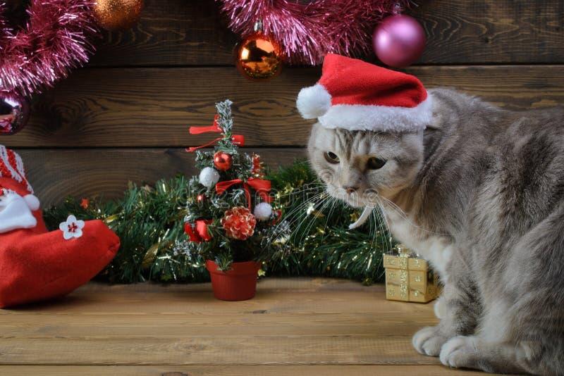 在一个新年` s盖帽和毛皮树玩具的一只猫 免版税图库摄影