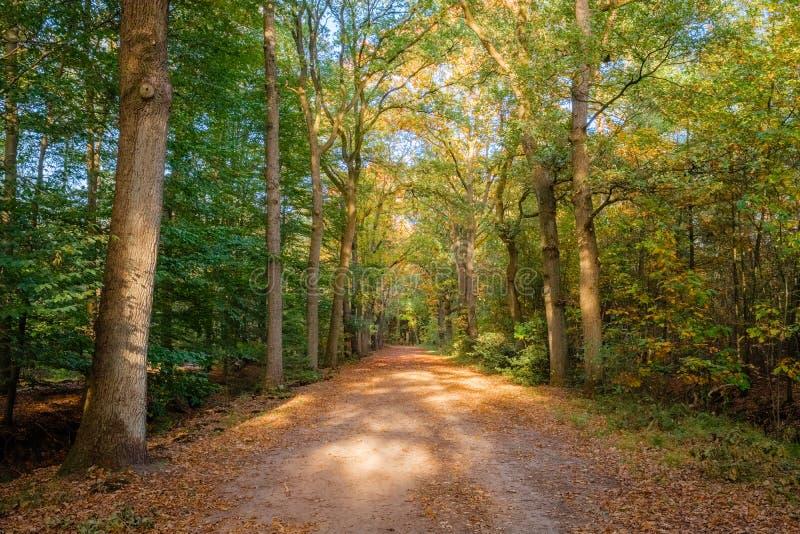 在一个晴朗的10月下午阿尔默洛,荷兰的森林道路 图库摄影