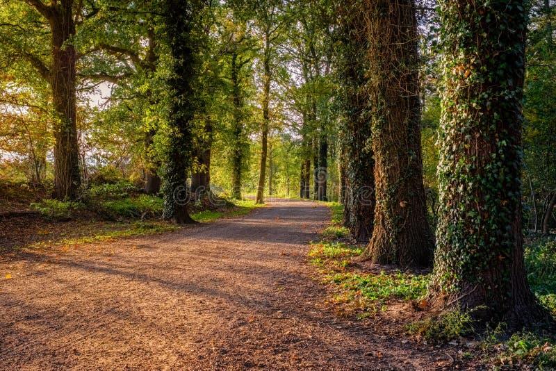 在一个晴朗的10月下午阿尔默洛,荷兰的森林道路 免版税图库摄影