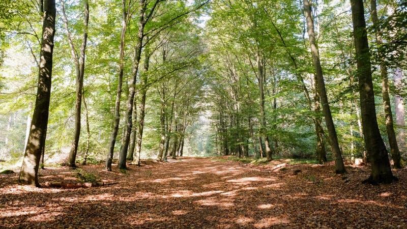 在一个晴朗的9月下午阿尔默洛,荷兰的森林道路 免版税库存照片