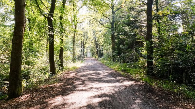 在一个晴朗的9月下午阿尔默洛,荷兰的森林道路 库存图片