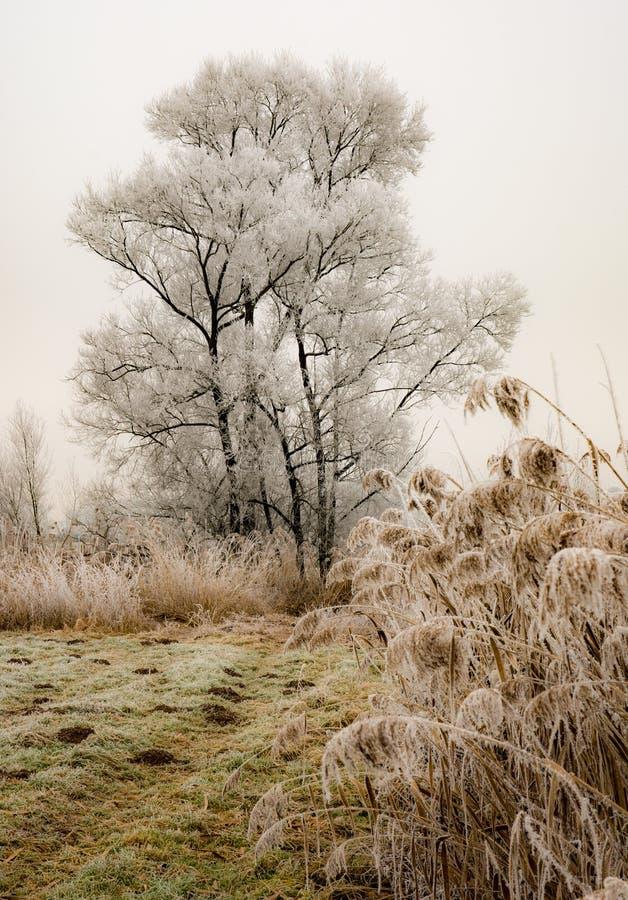 在一个有雾的冬天风景的偏僻的结霜的树 免版税库存照片