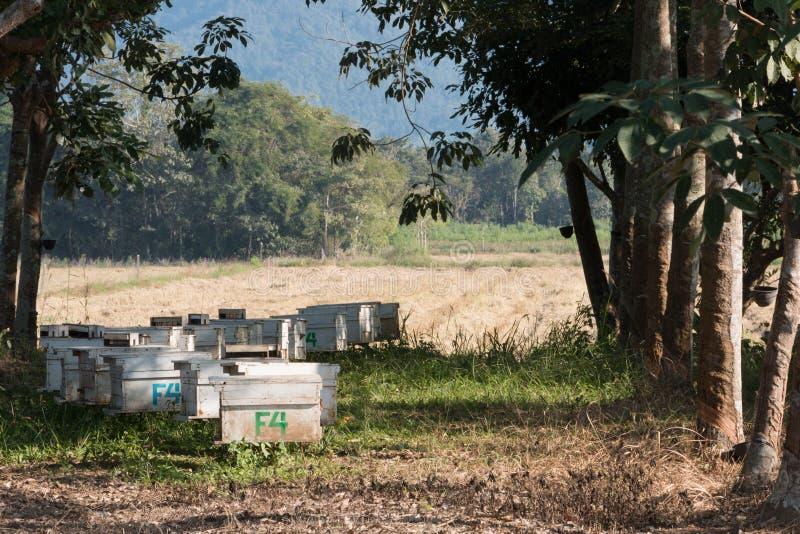 在一个木板箱的养蜂业 免版税库存图片