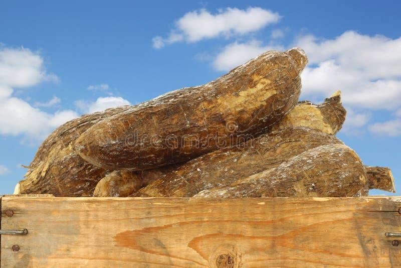 在一个木板箱的整个木薯根 库存照片