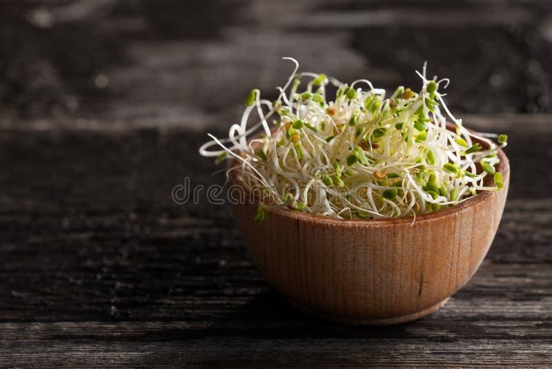 在一个木碗的红三叶草新芽 免版税库存图片