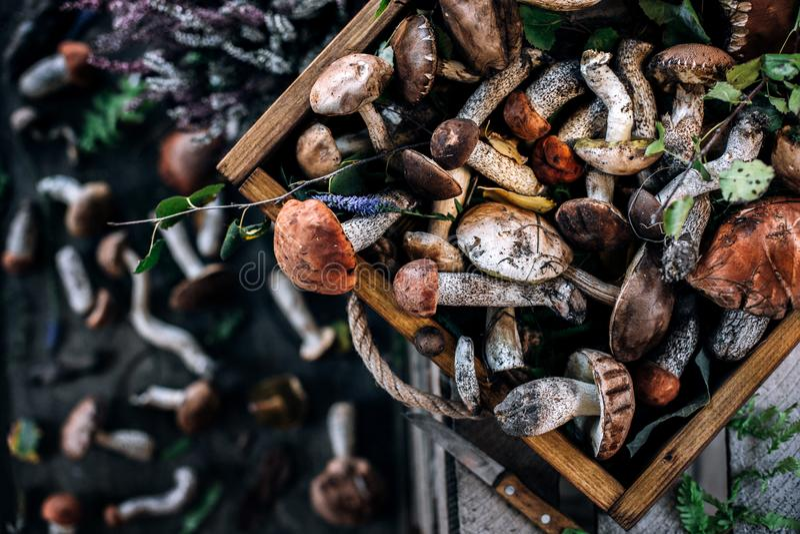在一个木箱的各种各样的森林蘑菇 库存图片
