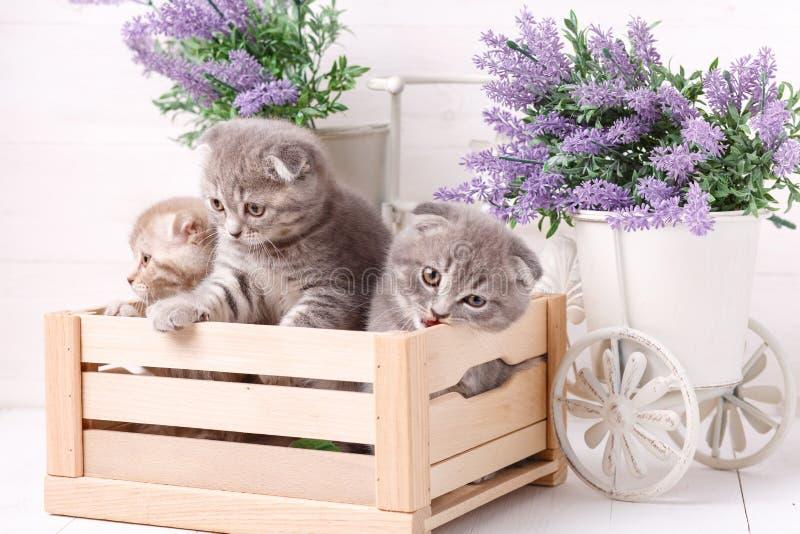 在一个木箱的小猫 淡紫色花在背景中 免版税库存图片