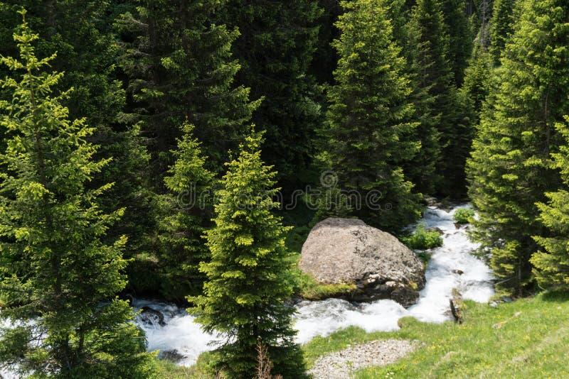 在一个杉木森林中间的小田园诗山小河在瑞士阿尔卑斯 免版税库存照片
