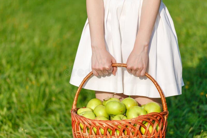 在一个柳条筐的大绿色成熟苹果在夏天结束时在阳光下在绿草在庭院里 库存照片