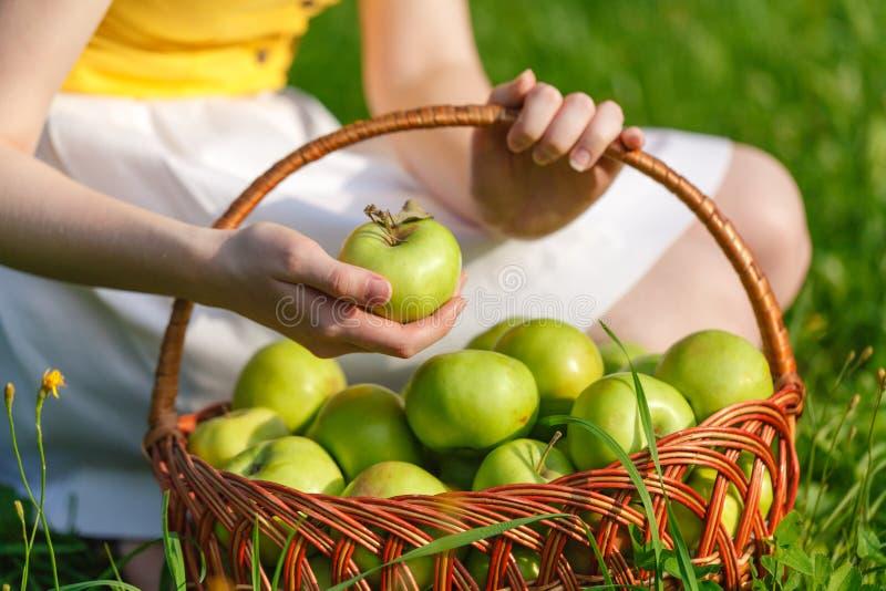 在一个柳条筐的大绿色成熟苹果在夏天结束时在阳光下在绿草在庭院里 图库摄影