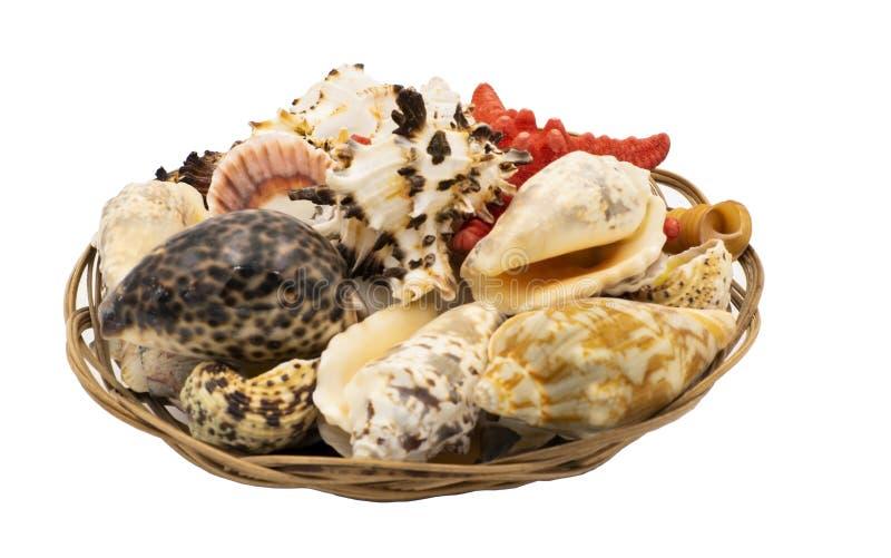 在一个柳条筐的海星和海壳 免版税库存照片