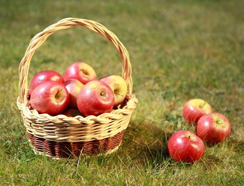 在一个柳条筐的苹果在一棵草,在晚上太阳 免版税库存照片
