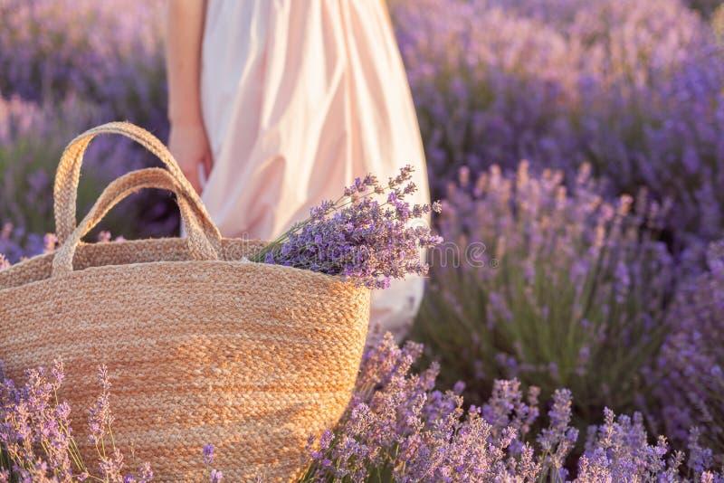 在一个柳条袋子的淡紫色花束在淡紫色领域日落 库存照片
