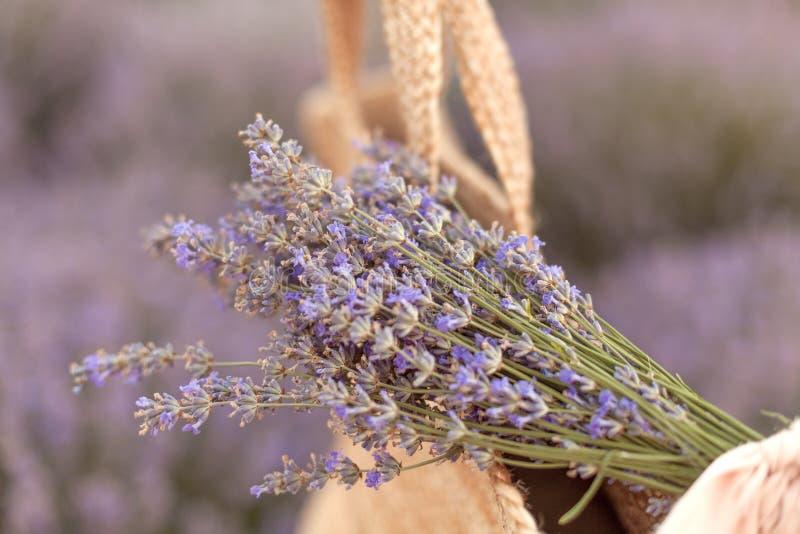 在一个柳条袋子的淡紫色花束在淡紫色领域日落 库存图片