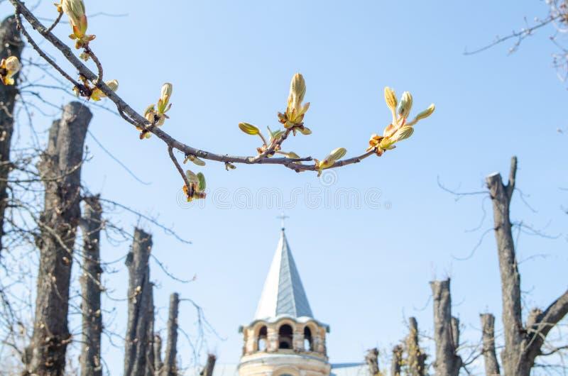在一个树枝的叶子在以古庙为背景的春天 库存照片