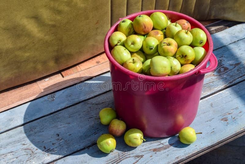 在一个桃红色篮子的成熟苹果在阳光下的长凳 库存照片