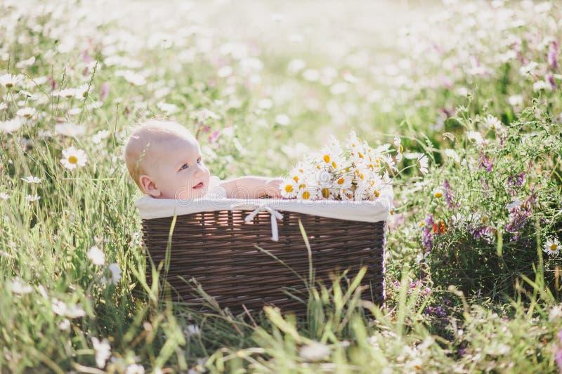 在一个棕色篮子的逗人喜爱的矮小的婴孩少年开会与在春黄菊领域的春黄菊 免版税图库摄影
