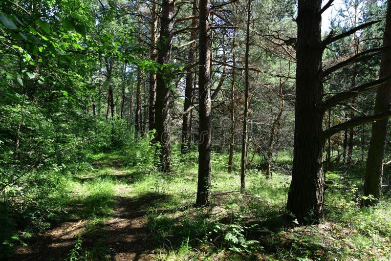 在一个森林中间的老路在晴天 免版税库存图片