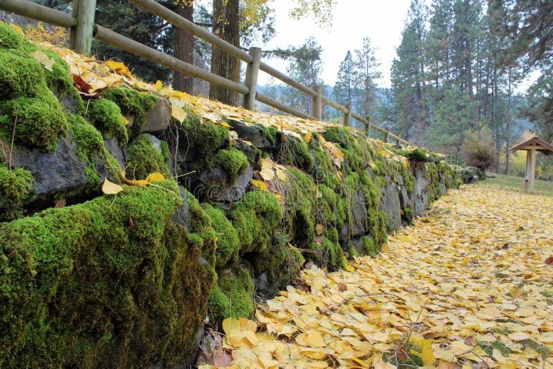 在一个森林场面的下落的黄色叶子与岩石盖了青苔 免版税库存照片