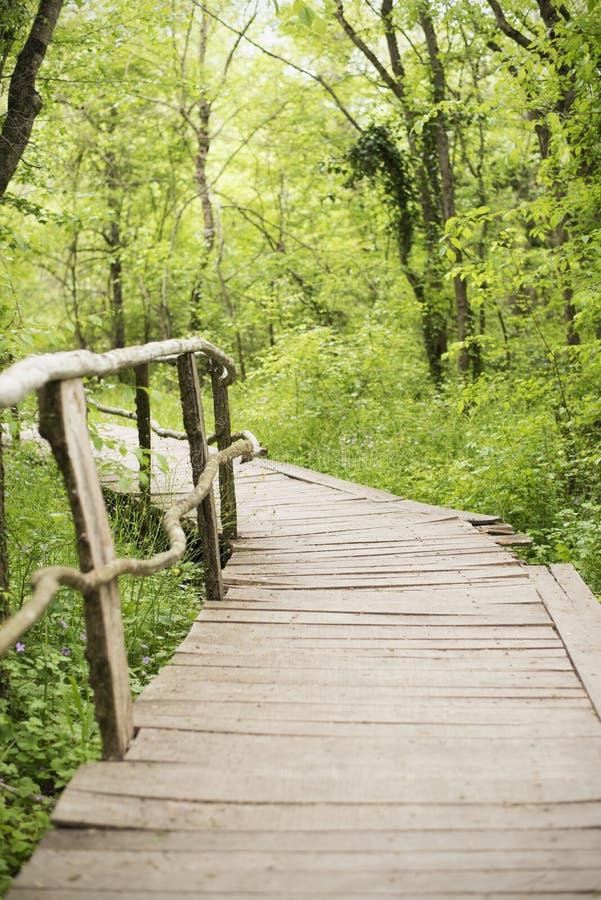 在一个森林木走道的木桥在Ropotamo河,保加利亚附近的绿色森林里 库存图片