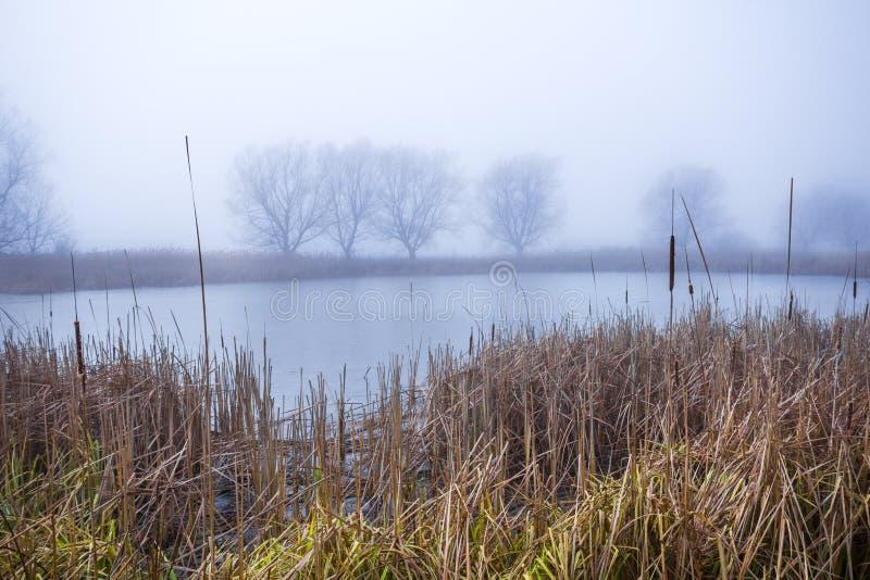 在一个森林湖的秋天早晨有雾和美好的温暖的颜色的 免版税库存照片