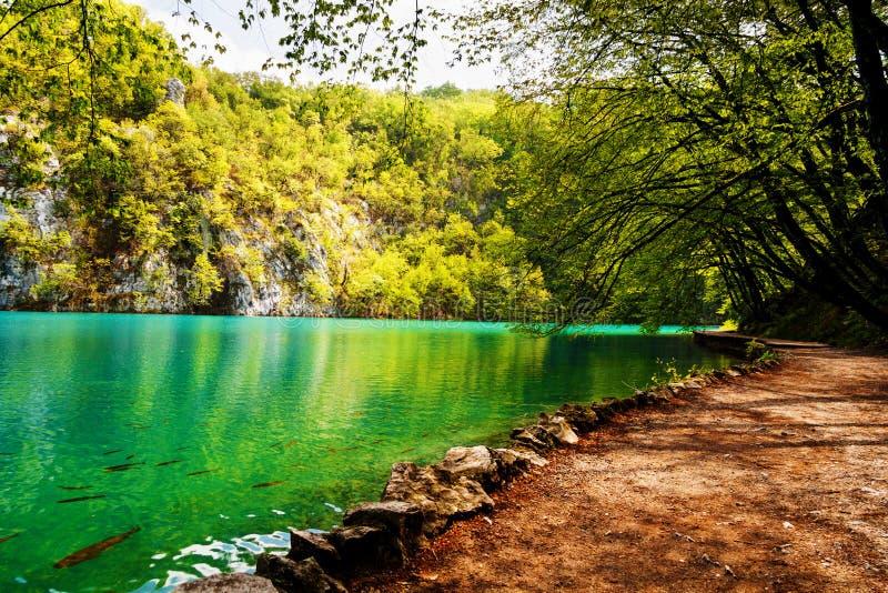 在一个森林湖附近的跳动跟踪在Plitvice湖国家公园, 免版税库存图片