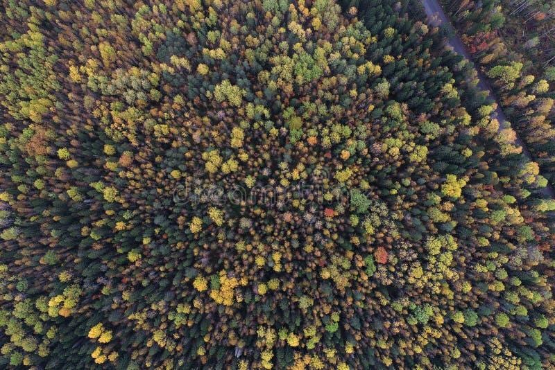 在一个森林的看法的下上面秋天颜色的 免版税库存图片