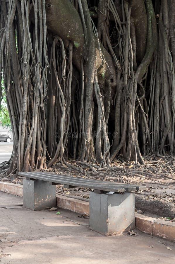 在一个正方形的一个位子与后边一棵巨大的古老树 免版税库存照片