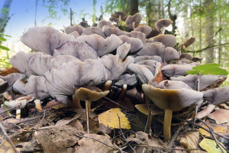 在一个残余部分的蘑菇在木头 库存照片