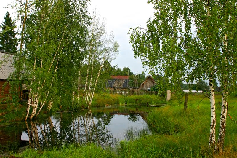 在一个池塘的农村浴有桦树的 免版税库存照片