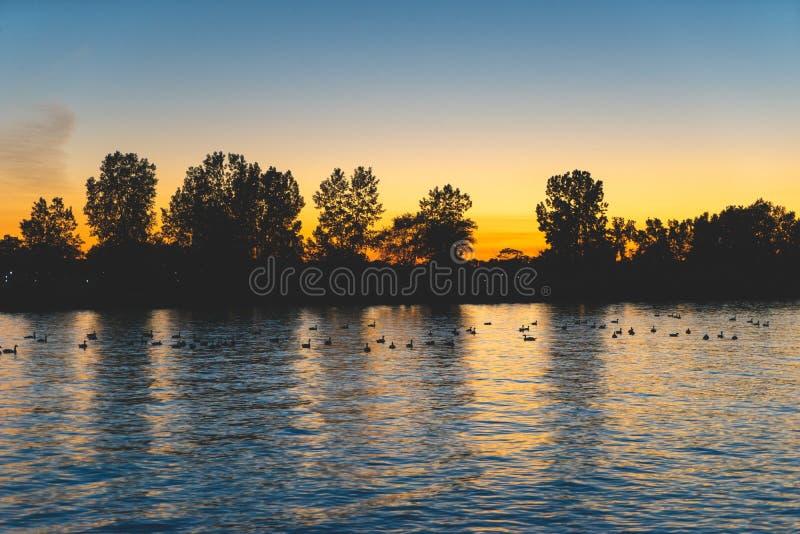 在一个池塘的鸭子日落的 库存照片