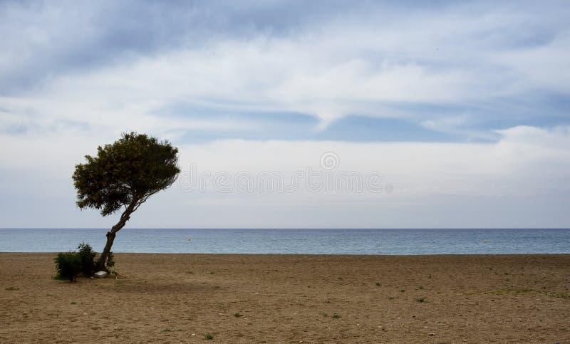在一个沙滩的一棵孤零零树反对海 免版税图库摄影