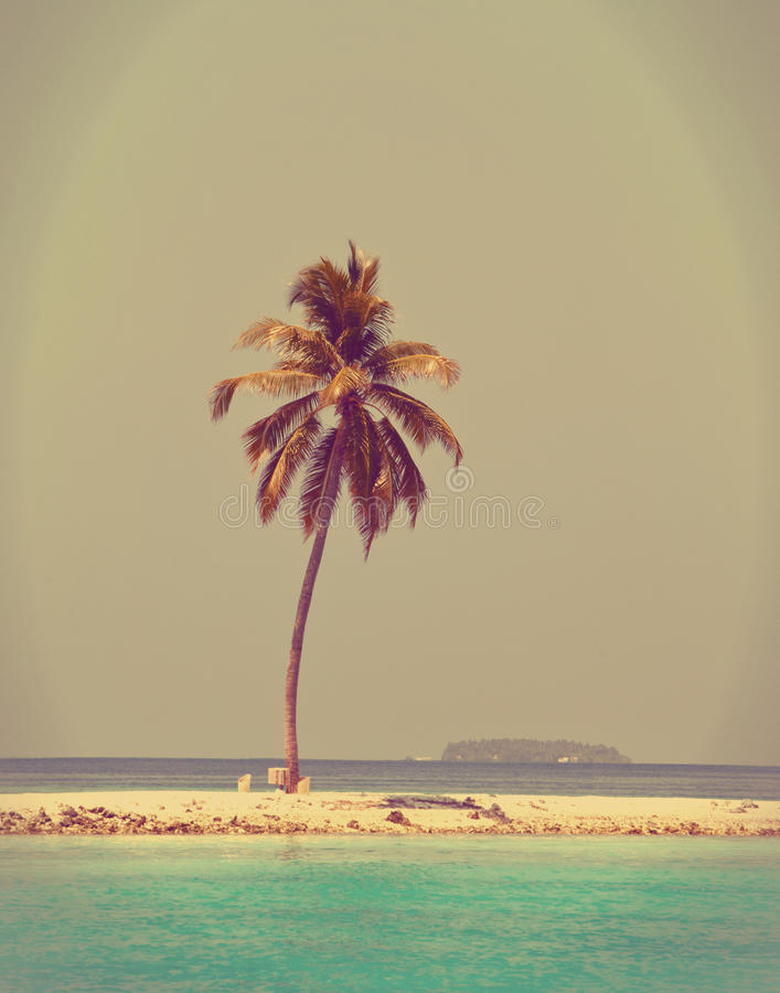 在一个沙滩的棕榈树在深蓝海。Maldives.with一个减速火箭的作用 免版税库存照片