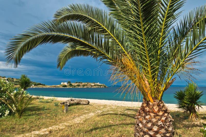 在一个沙滩的棕榈树,老罗马堡垒在背景中 库存照片