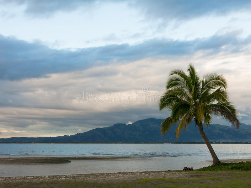在一个海滩在多云天,斐济的孤立棕榈树 免版税库存照片