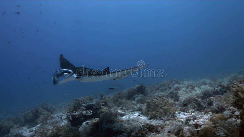 在一个清洗的驻地的披巾,图巴塔哈群礁在菲律宾 免版税库存照片