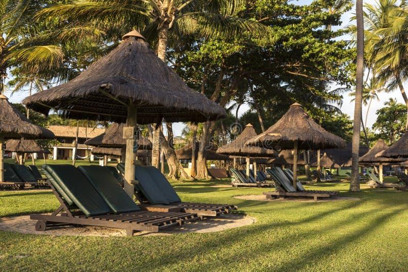 在一个温暖的晴天期间,美丽的热带手段太阳懒人和棕榈树 免版税库存图片