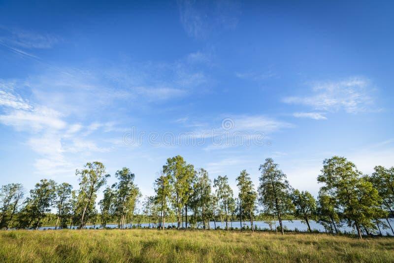 在一个湖前面的树在夏天 图库摄影