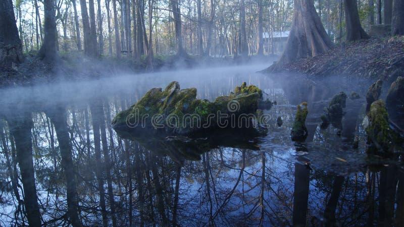 在一个湖的树干在一有雾的天在森林Ginnie反弹,佛罗里达 美国 库存图片