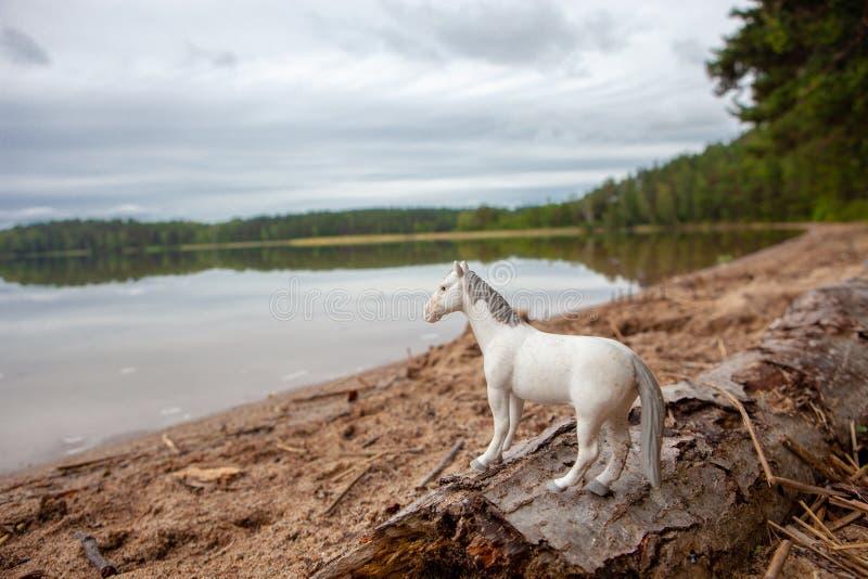 在一个湖的沙滩在有多云天空的一个森林里和树、镇静水、安静的背景和马 免版税库存图片