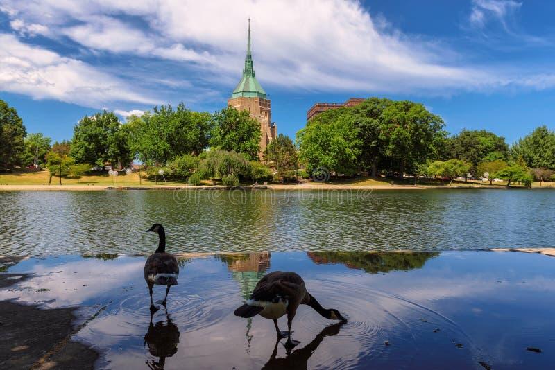 在一个湖近的涉过盐水湖的鸟在克利夫兰,俄亥俄 免版税库存照片