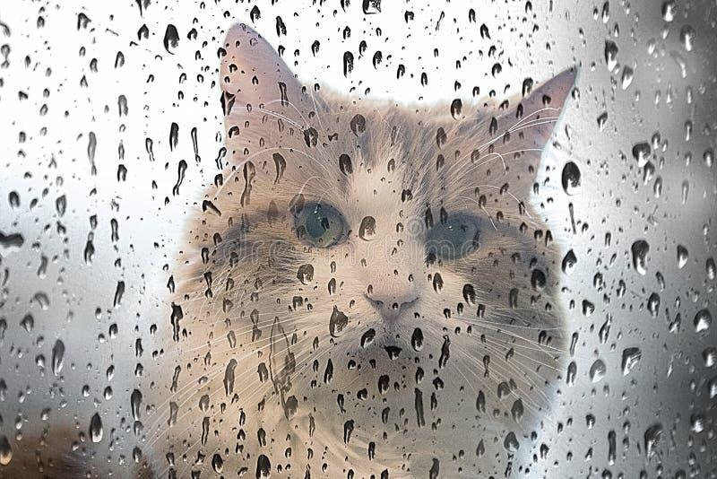 在一个湿窗口后的猫 免版税库存照片