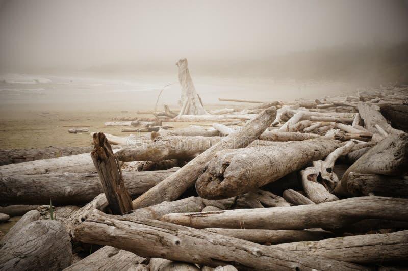 在一个漂流木头充满的海滩的有薄雾的早晨在Tofino附近,加拿大 库存图片
