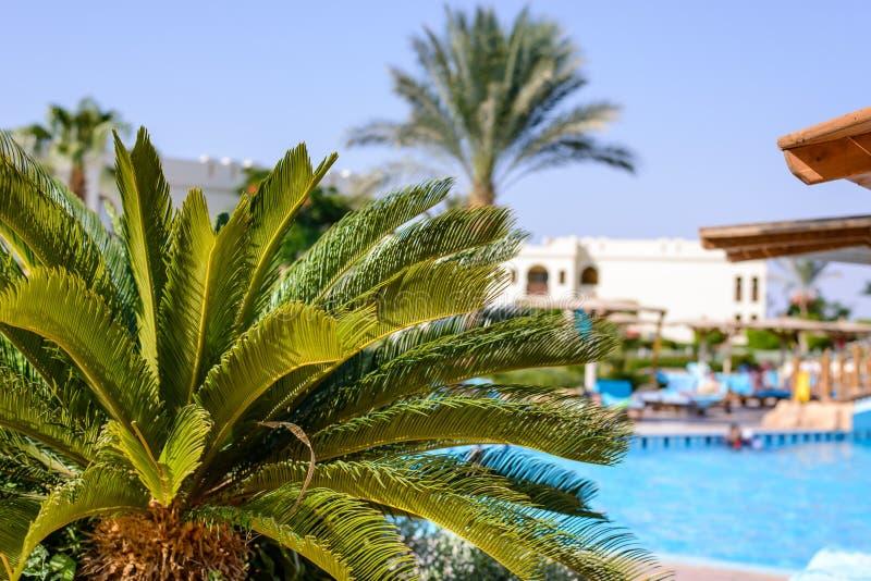 在一个热带度假胜地的棕榈树 免版税库存图片