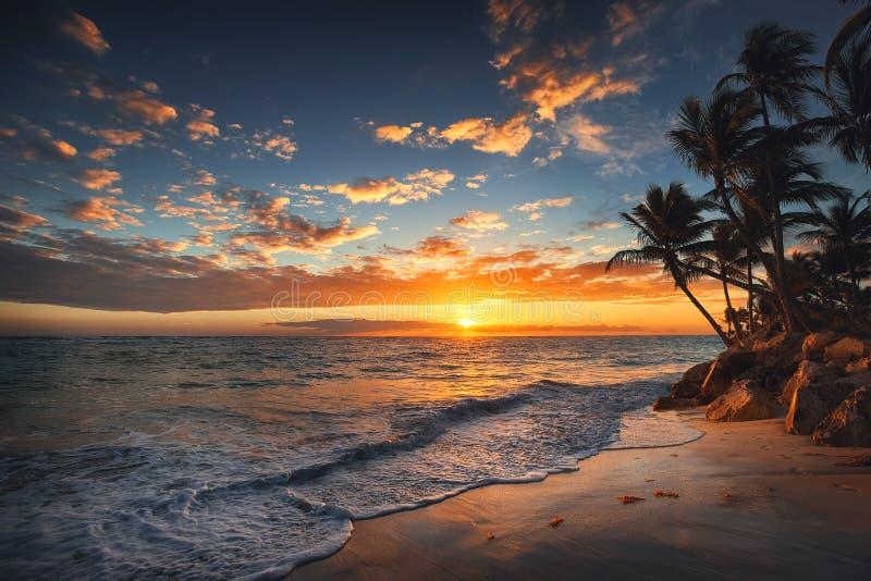 在一个热带海岛的日出 在沙滩的棕榈树 库存图片