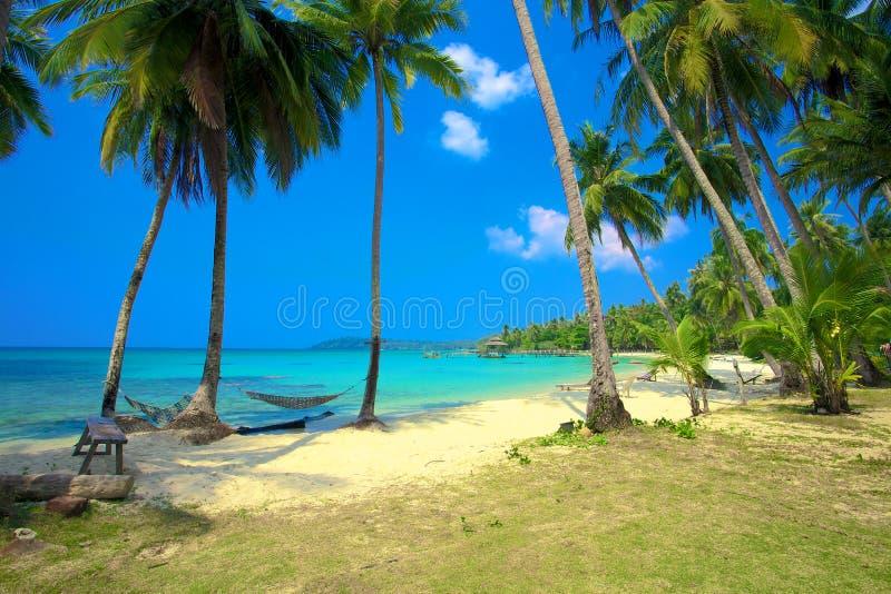在一个热带海滩的二个吊床 库存照片