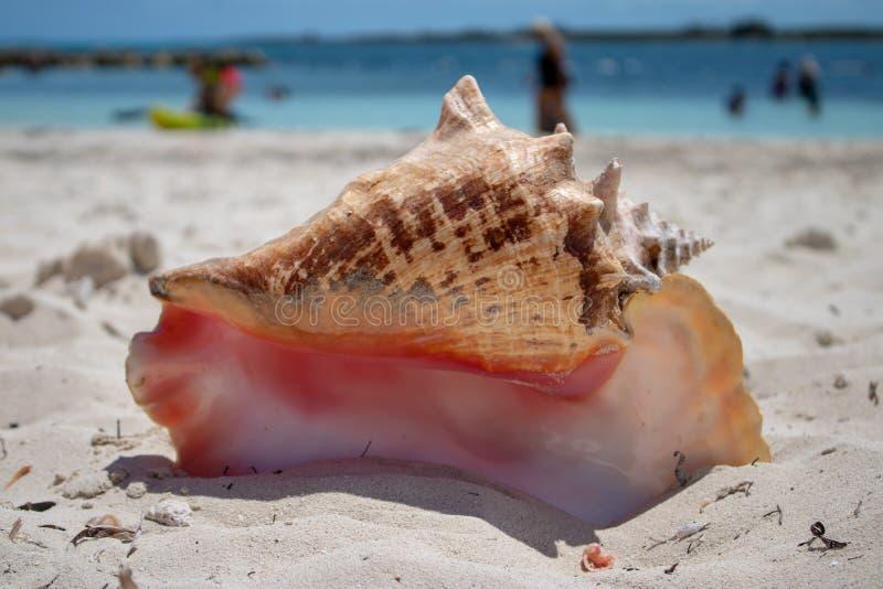 在一个热带海滩的大壳 免版税库存图片