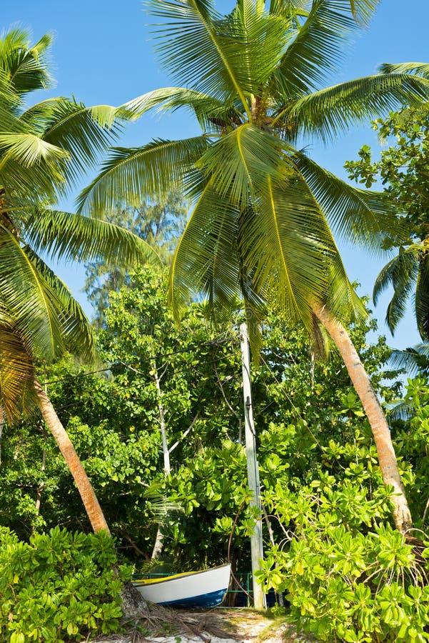 在一个热带海滩的高棕榈在Mahe海岛塞舌尔群岛 库存照片