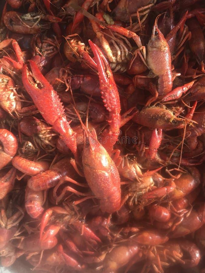在一个煮沸的罐的路易斯安那小龙虾 免版税库存照片